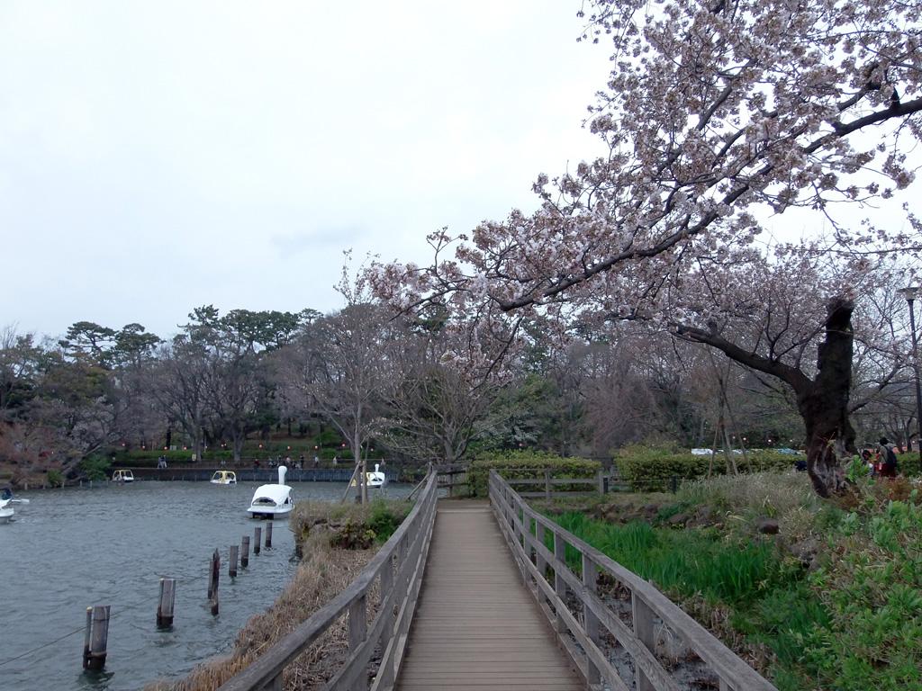 洗足池公園の桜 花見特集2018