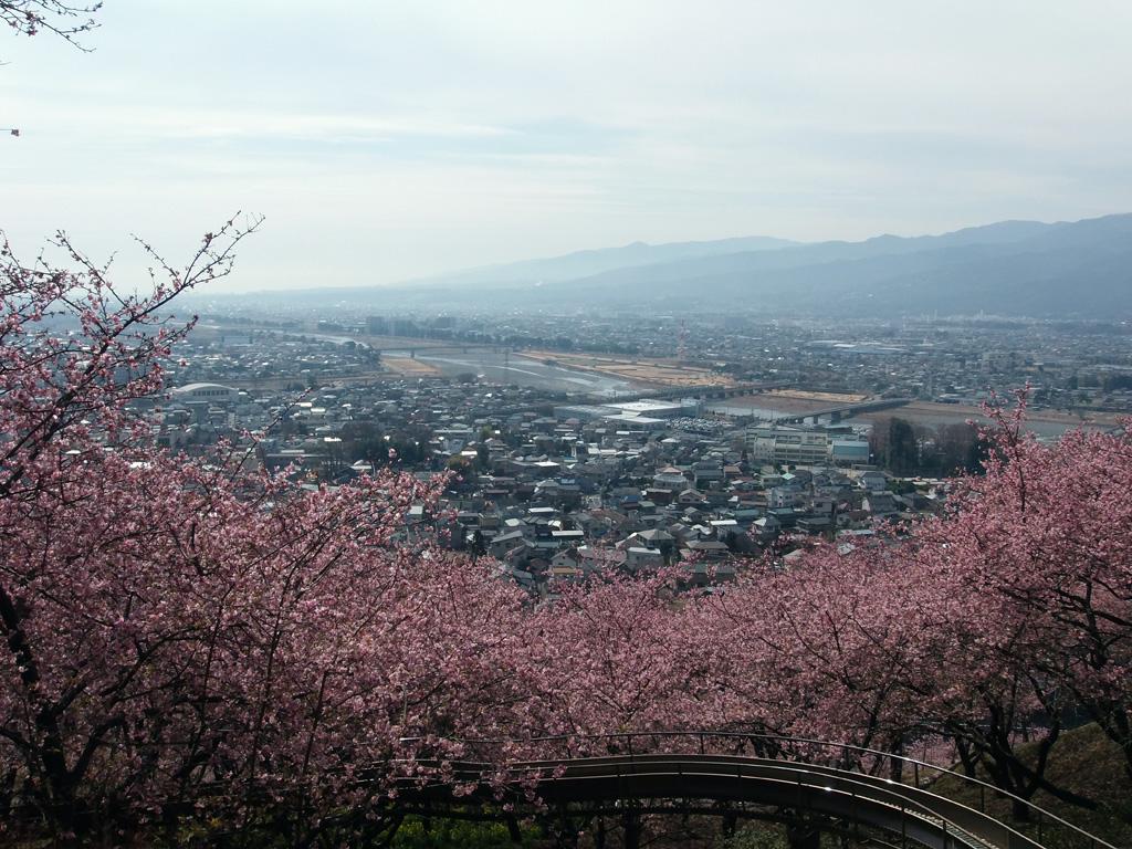 ハーブ ガーデン 山 松田