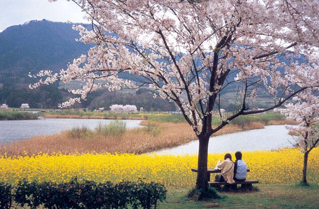 上堰潟公園の桜 花見特集2021