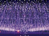 あしかがフラワーパーク「光の花の庭」の写真