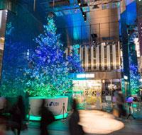山野楽器本店クリスマスツリー