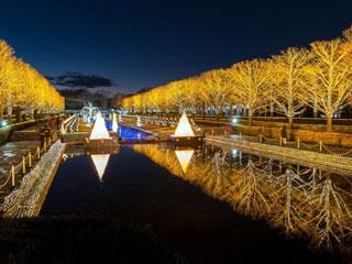 国営昭和記念公園 Winter Vista Illumination写真1