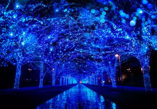 青の洞窟 SHIBUYAの写真4