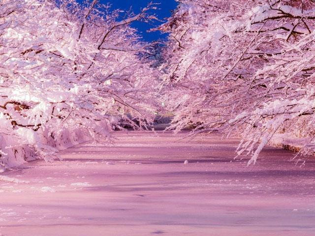 冬に咲くさくらライトアップ|イルミネーション特集