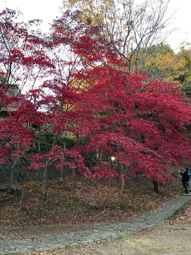 生田緑地・川崎市立日本民家園の紅葉情報|紅葉情報2018