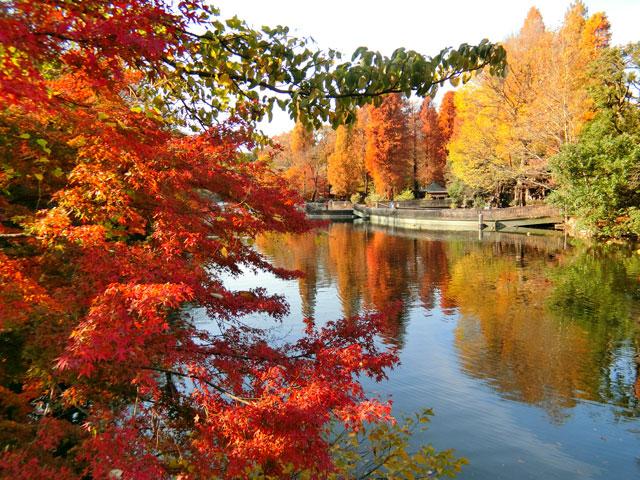 井の頭恩賜公園の紅葉|紅葉情報2020