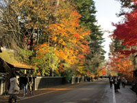 The Autumn Leaves of Kakunodate