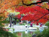 成田山新勝寺の紅葉