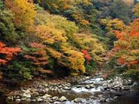 箱根湯本の紅葉