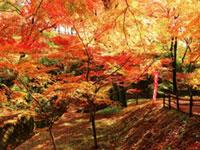 水沢もみじ谷の紅葉
