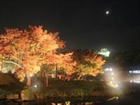 名勝 玄宮園の紅葉