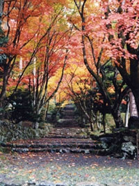 鶏足寺(旧飯福寺)の紅葉