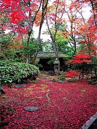 妙心寺 大法院の紅葉