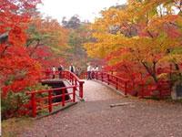 弥彦公園もみじ谷の紅葉