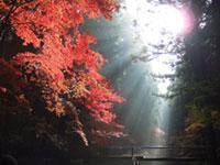 遠江国一宮 小國神社の紅葉