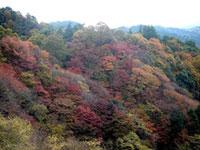 比叡山延暦寺・比叡山ドライブウェイの紅葉