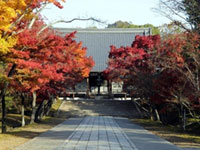 仁和寺の紅葉