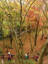 笠置山自然公園の紅葉