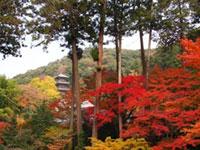 清水寺(島根県)の紅葉