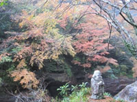The Autumn Leaves of Nakatsu Gorge