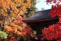 平林寺(金鳳山 平林禅寺)の紅葉