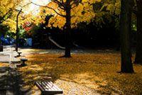 芝公園の紅葉