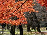 京都府立植物園の紅葉