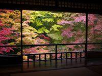 八瀬 瑠璃光院の紅葉