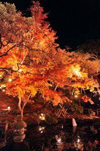 鎌倉 長谷寺の紅葉
