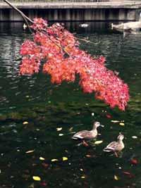蚕糸の森公園の紅葉