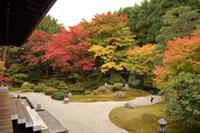泉涌寺の紅葉