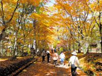 旧碓氷峠見晴台(軽井沢)の紅葉