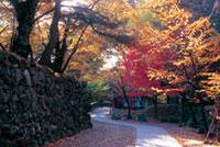 小諸城址 懐古園の紅葉
