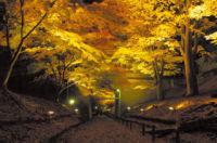 上田城跡公園けやき並木遊歩道(二の丸堀跡)の紅葉