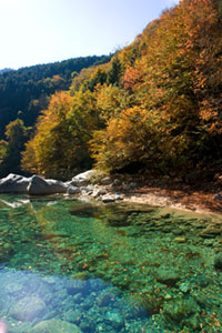 The Autumn Leaves of Atera Valley