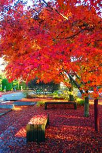 千葉県立柏の葉公園の紅葉