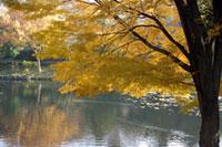 県立三ツ池公園の紅葉