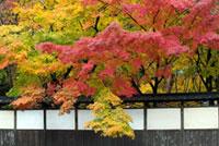 中野邸記念館(旧中野邸美術館)の紅葉