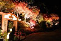 有馬温泉 太閤の湯「紅葉の棚田」の紅葉