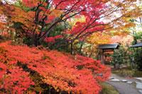白鳥庭園の紅葉