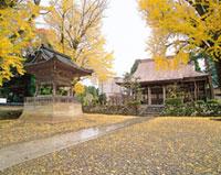 興行寺の紅葉