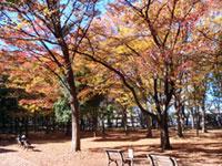 城北中央公園の紅葉