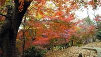 戸山公園の紅葉