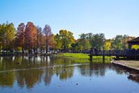 舎人公園の紅葉