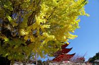 豊国神社 五重塔の紅葉