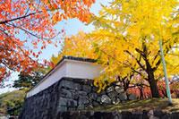 舞鶴公園の紅葉