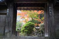三井寺(園城寺)の紅葉