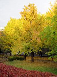 県立保土ケ谷公園の紅葉