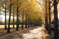 科学万博記念公園の紅葉