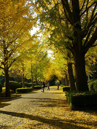笠松運動公園の紅葉